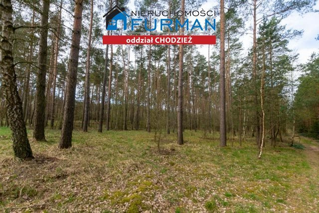 Działka leśna na sprzedaż Tarnowo  19800m2 Foto 1
