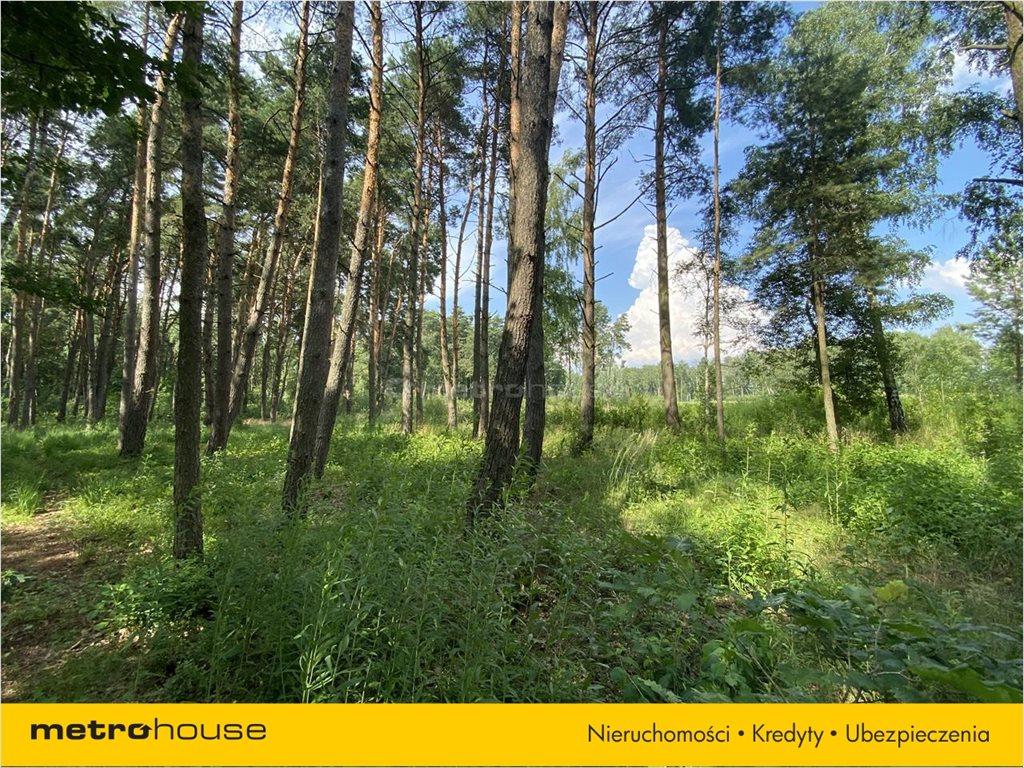 Działka leśna na sprzedaż Władysławów, Lesznowola  3128m2 Foto 7