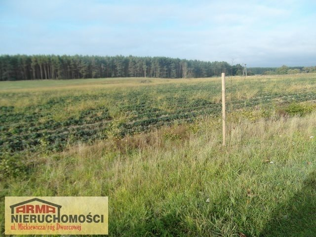 Działka rolna na sprzedaż Poczernin  3000m2 Foto 2