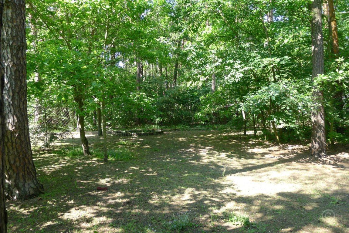 Działka leśna na sprzedaż Jedlicze A  1000m2 Foto 1