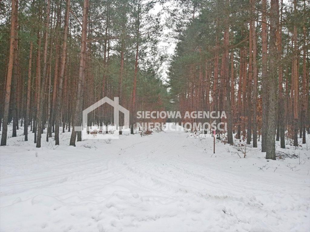 Działka leśna na sprzedaż Zawada  5155m2 Foto 5