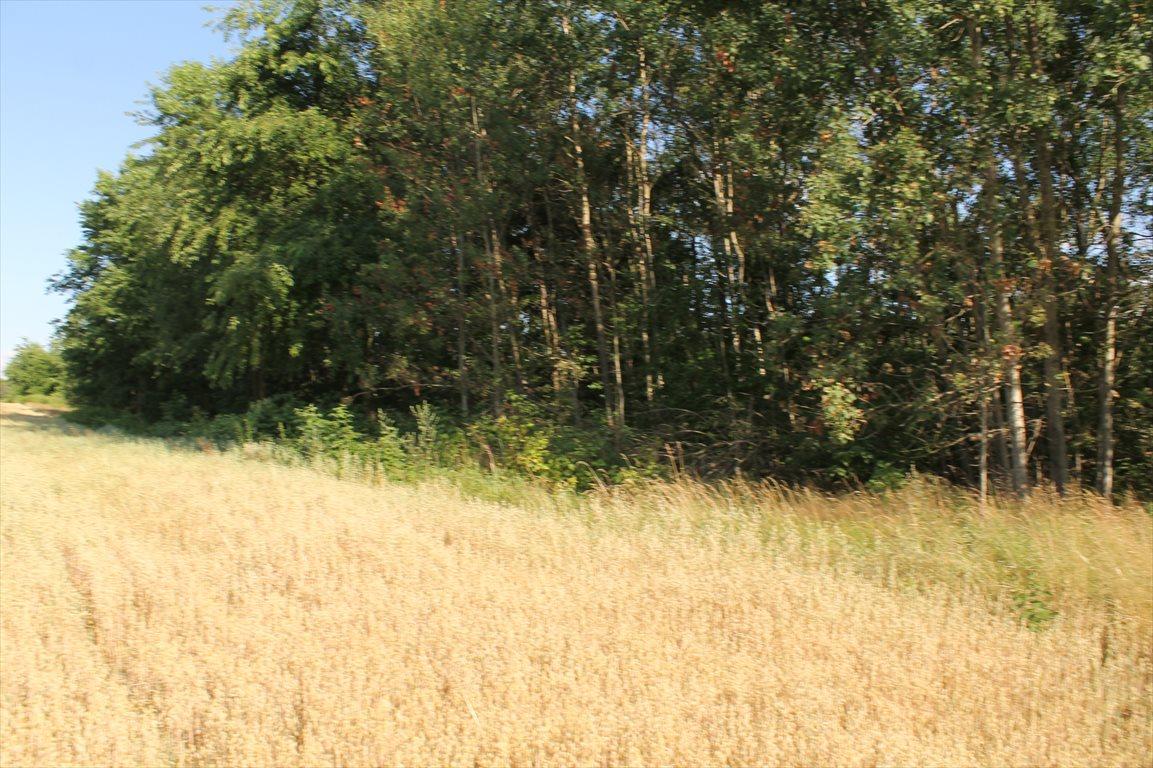 Działka rolna na sprzedaż Łagiewniki Nowe  9500m2 Foto 8