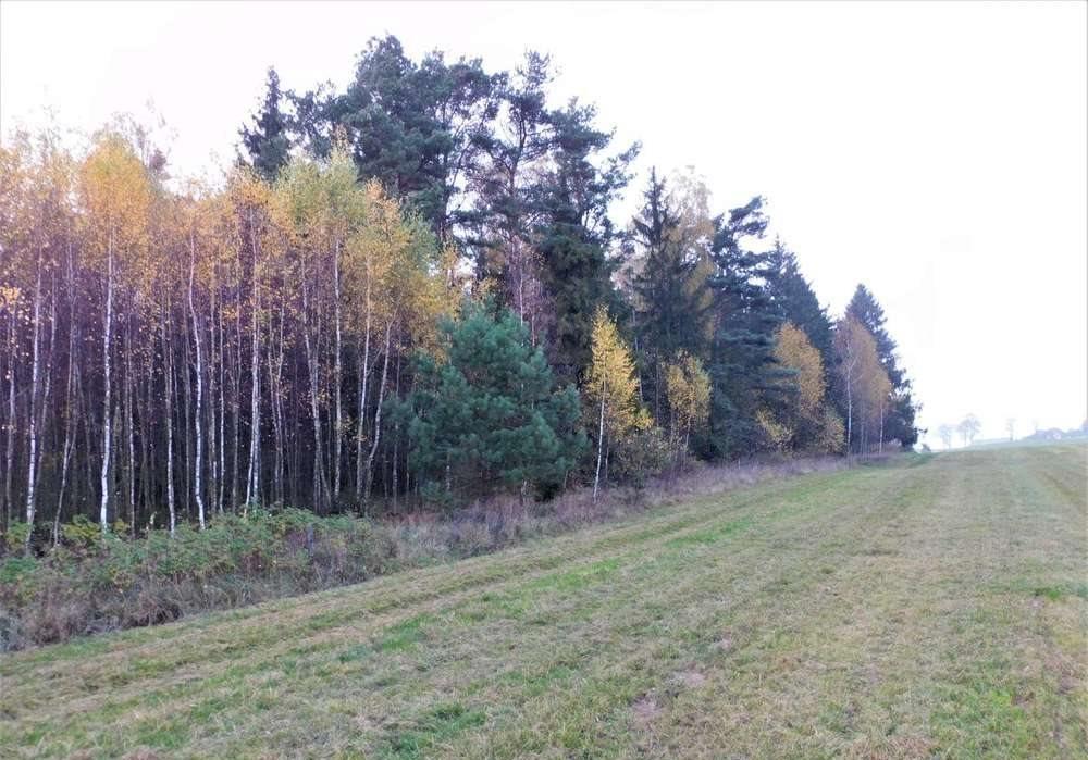 Działka rolna na sprzedaż Orzyny  3300m2 Foto 2