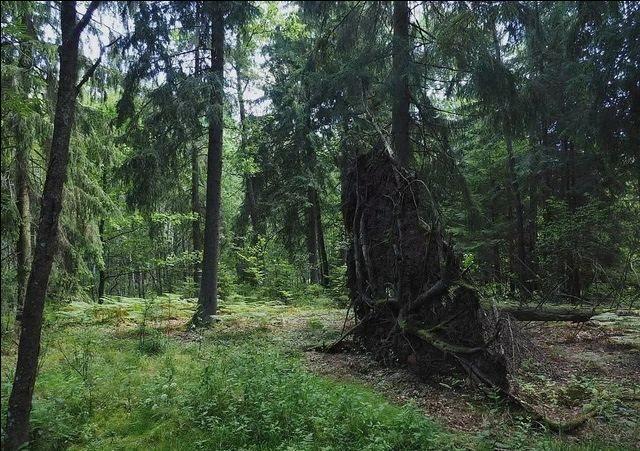 Działka leśna na sprzedaż Zerbuń  42900m2 Foto 1