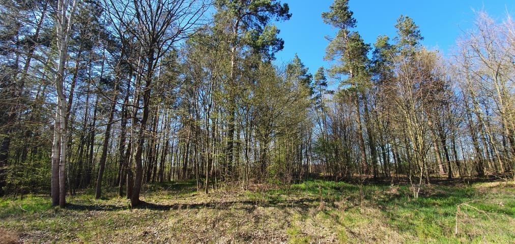 Działka leśna na sprzedaż Stary Cydzyn  8000m2 Foto 1