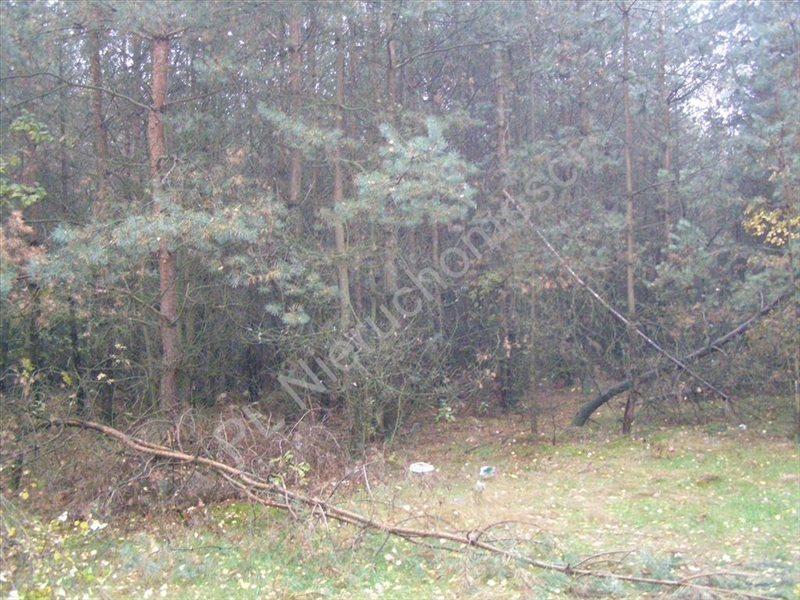 Działka rolna na sprzedaż Pieńki Osuchowskie  27700m2 Foto 8