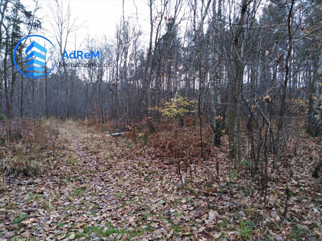Działka leśna na sprzedaż Nowy Prażmów, Leśna  1521m2 Foto 10