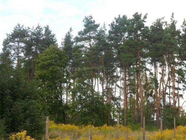 Działka budowlana na sprzedaż Poznań, Naramowice, Naramowice, Cytrynowa  718m2 Foto 6