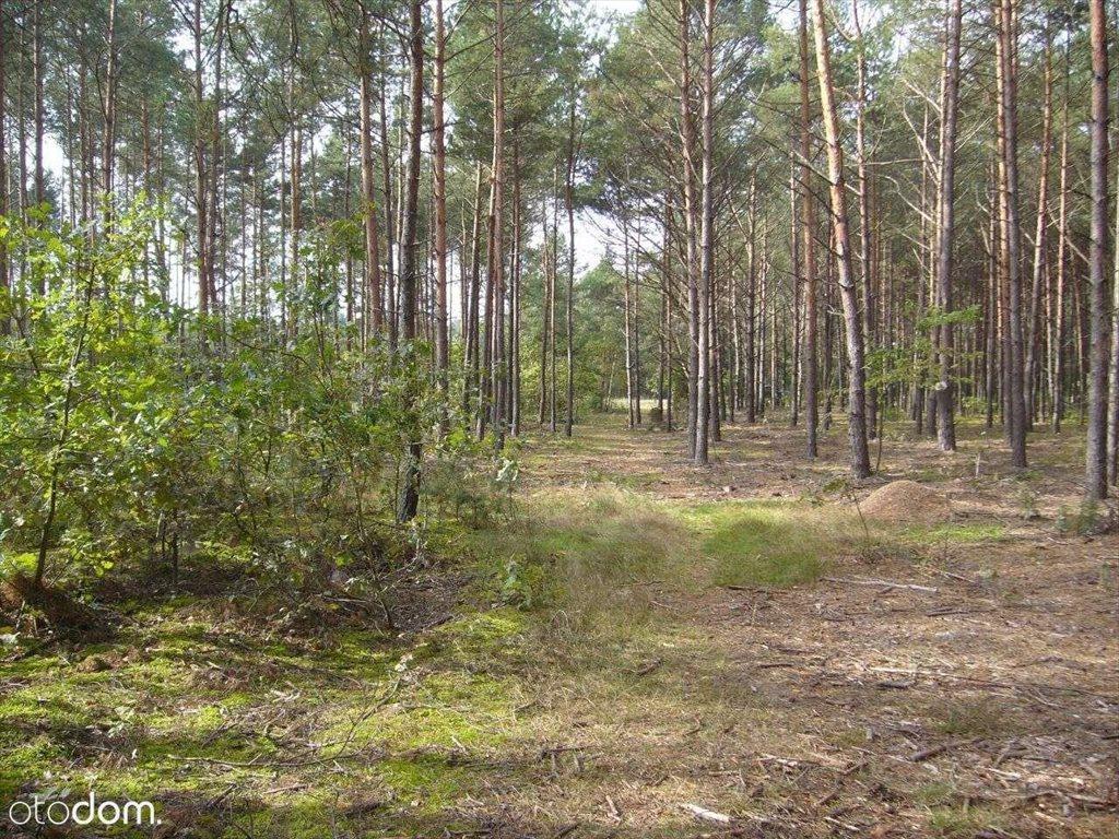 Działka leśna na sprzedaż Grudunki  140100m2 Foto 4