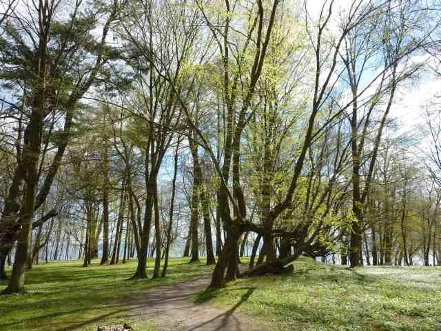 Działka budowlana pod dzierżawę Osłonino, leśna  530m2 Foto 12