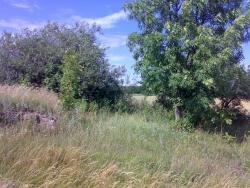 Działka siedliskowa na sprzedaż Okrasin  3600m2 Foto 3