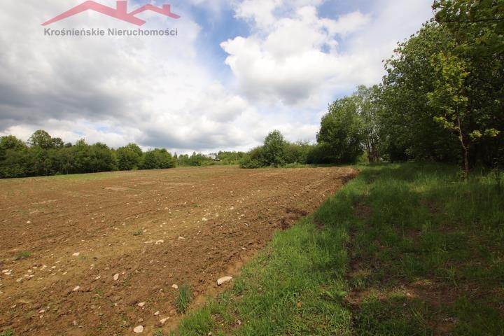 Działka rolna na sprzedaż Korczyna  3000m2 Foto 2