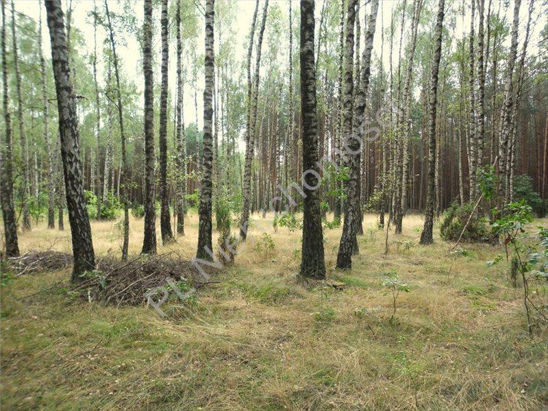 Działka leśna na sprzedaż Izabelin  27242m2 Foto 1
