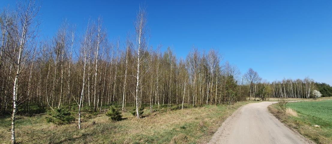 Działka leśna na sprzedaż Stary Cydzyn  8000m2 Foto 5