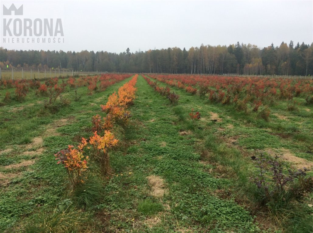 Działka rolna na sprzedaż Pasieki, Babia Góra  13300m2 Foto 9