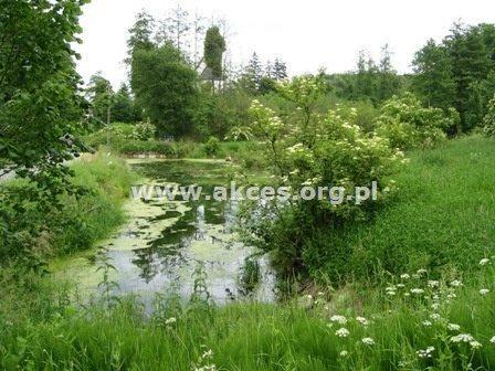 Działka siedliskowa na sprzedaż Jeziórka  14000m2 Foto 6