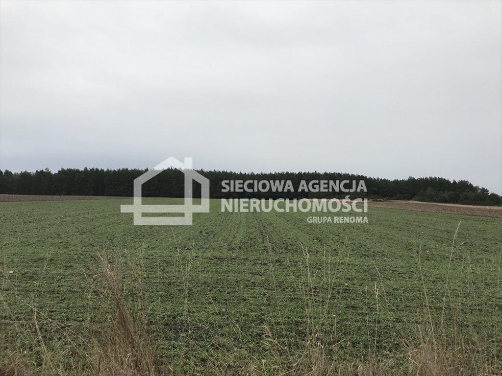 Działka rolna na sprzedaż Sasino  12100m2 Foto 3