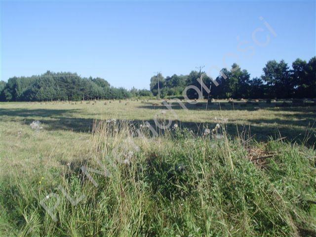 Działka budowlana na sprzedaż Kozery  3001m2 Foto 1