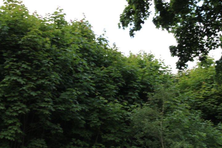 Działka rolna na sprzedaż Skotniki  17600m2 Foto 8