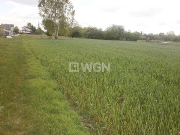 Działka rolna na sprzedaż Czarny Las, Częstochowska  23000m2 Foto 4