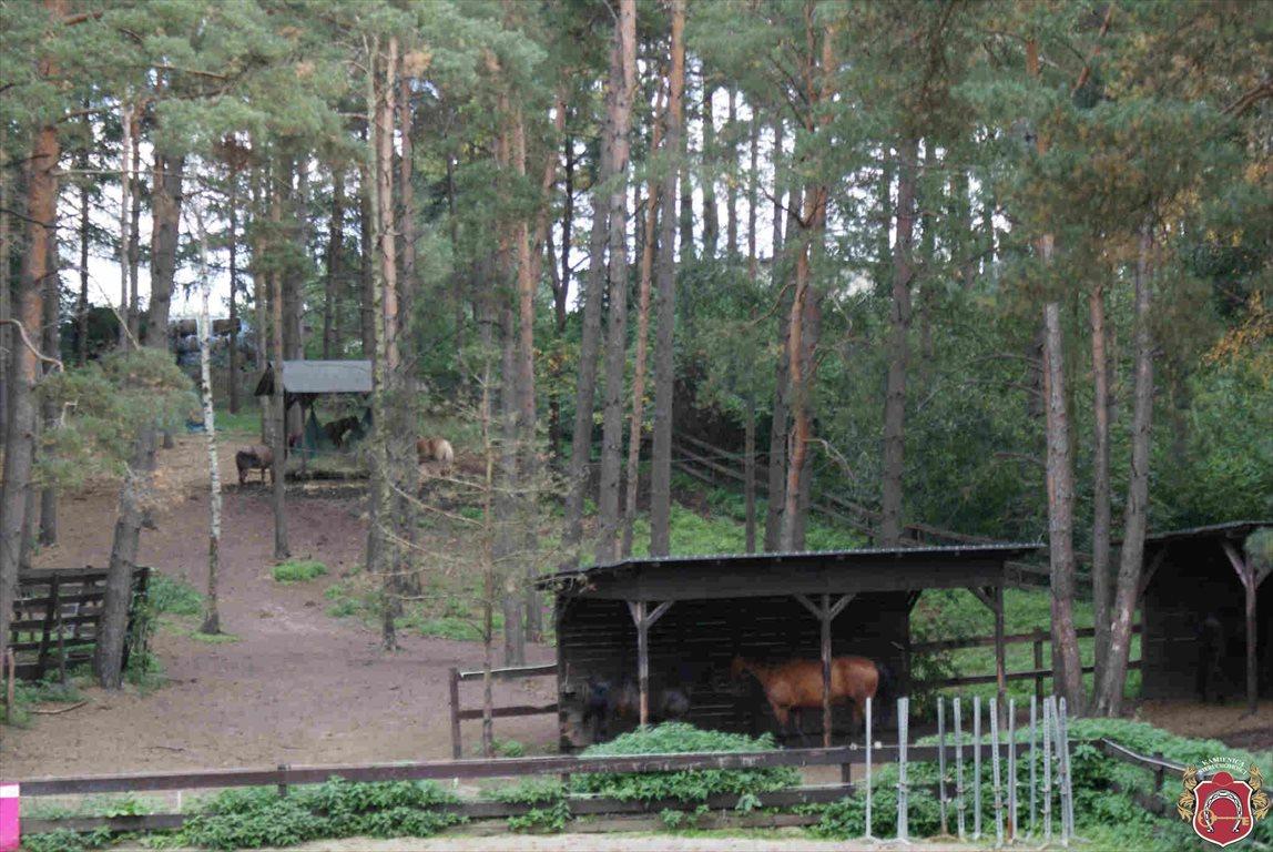 Lokal użytkowy na sprzedaż Borkowo  83m2 Foto 10