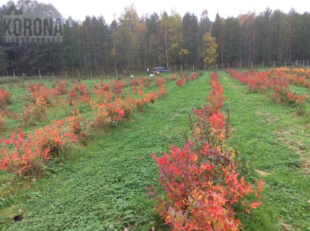 Działka rolna na sprzedaż Pasieki, Babia Góra  13300m2 Foto 11