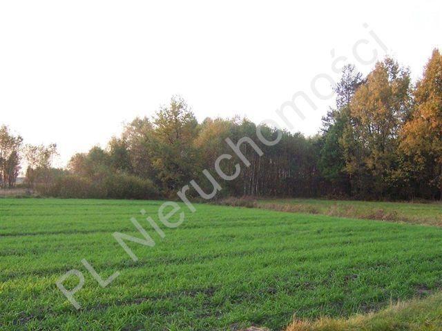 Działka rolna na sprzedaż Czarna  9431m2 Foto 1