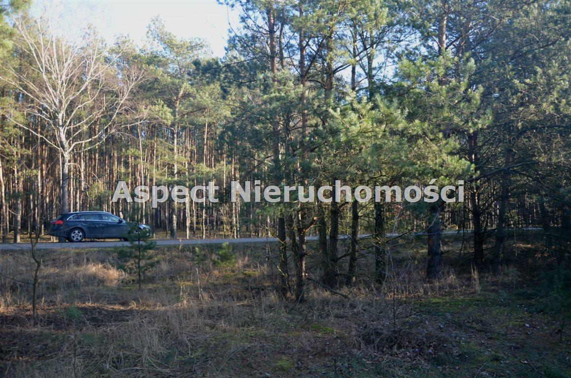 Działka leśna na sprzedaż Suchcice  12200m2 Foto 4
