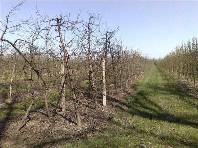 Działka rolna na sprzedaż Radwanków Szlachecki  8100m2 Foto 2