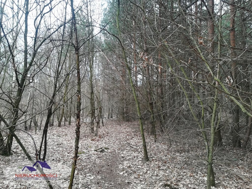 Działka leśna na sprzedaż Gruszów Wielki  11500m2 Foto 3