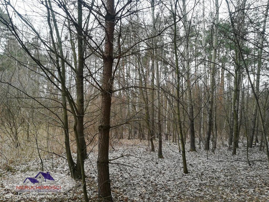 Działka leśna na sprzedaż Gruszów Wielki  11500m2 Foto 4