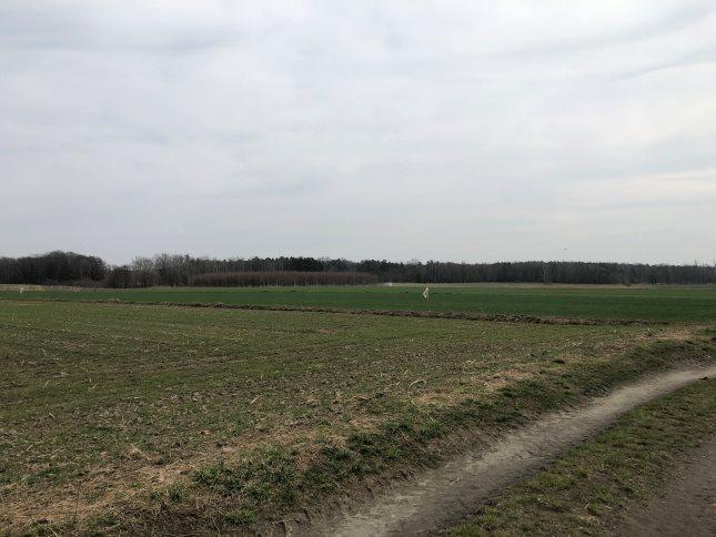 Działka rolna na sprzedaż Połomia  10300m2 Foto 10