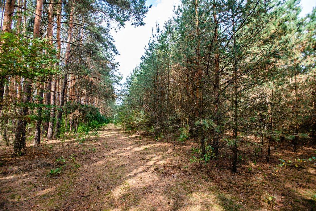 Działka inna na sprzedaż Zielona Góra, Ochla, Ochla dz. nr 2229  1010m2 Foto 1
