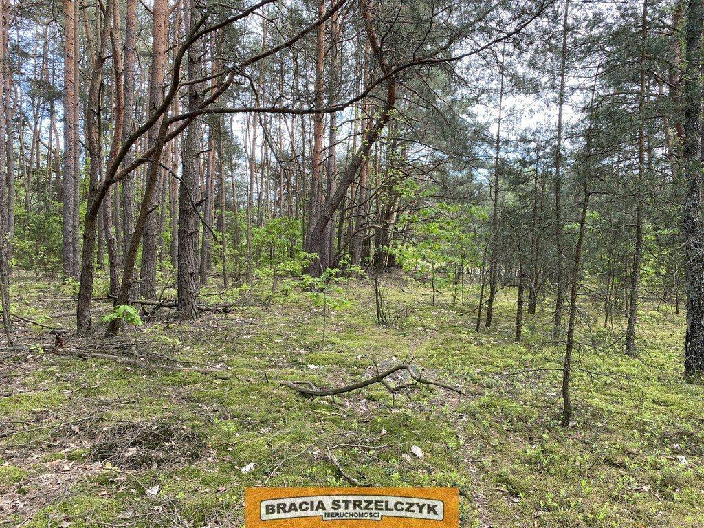 Działka leśna na sprzedaż Wólka Mlęcka  2800m2 Foto 8