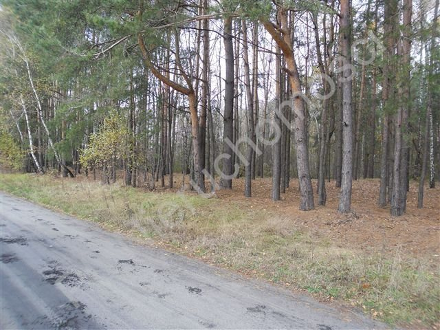 Działka leśna na sprzedaż Wólka Wybraniecka  12500m2 Foto 3