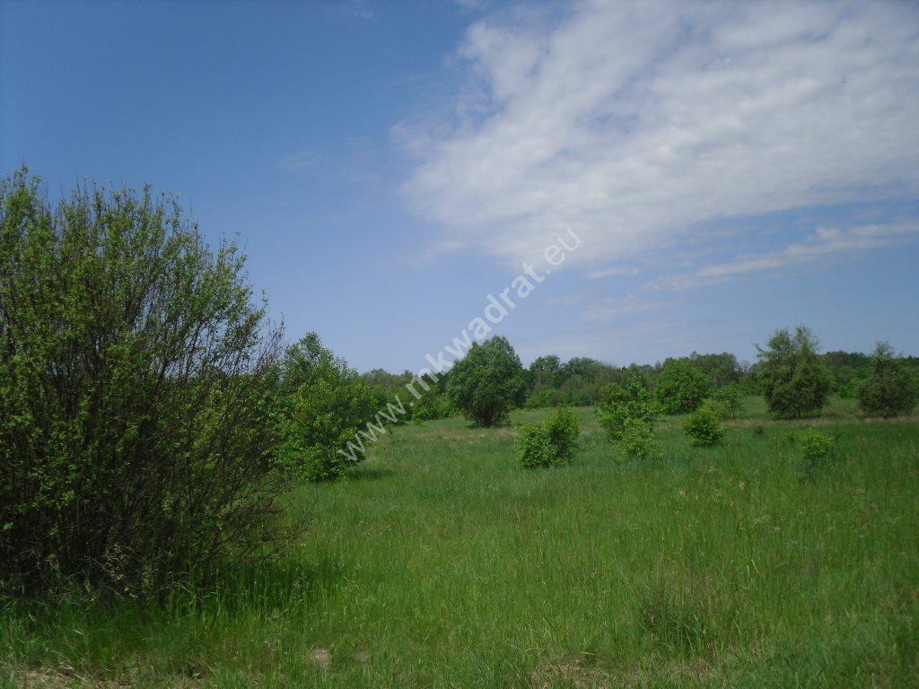 Działka siedliskowa na sprzedaż Sowia Wola  15000m2 Foto 3