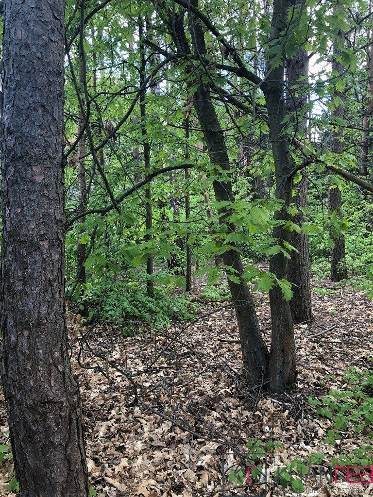 Działka leśna z prawem budowy na sprzedaż Izabelin C, Krótka  1451m2 Foto 8