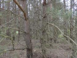 Działka leśna na sprzedaż Skroda Wielka  9200m2 Foto 4
