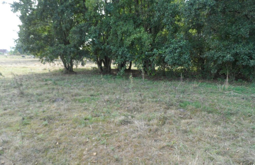 Działka siedliskowa na sprzedaż Nieborowo  11700m2 Foto 4