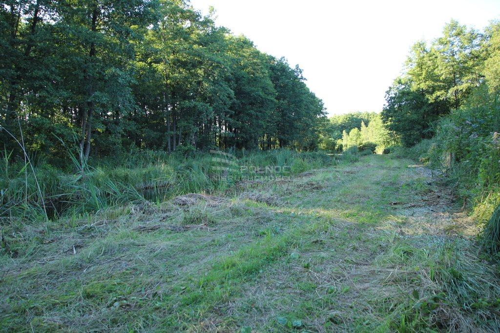 Działka leśna na sprzedaż Daniszewo  7000m2 Foto 5