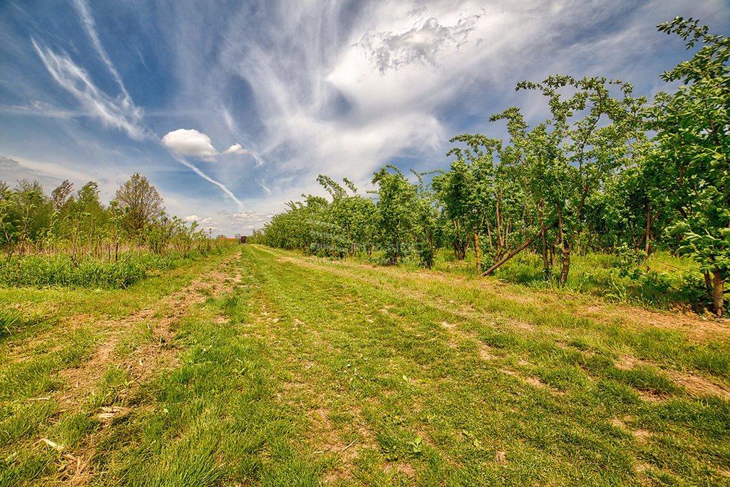Działka rolna na sprzedaż Kazimierz Dolny, Wylągi  21600m2 Foto 6
