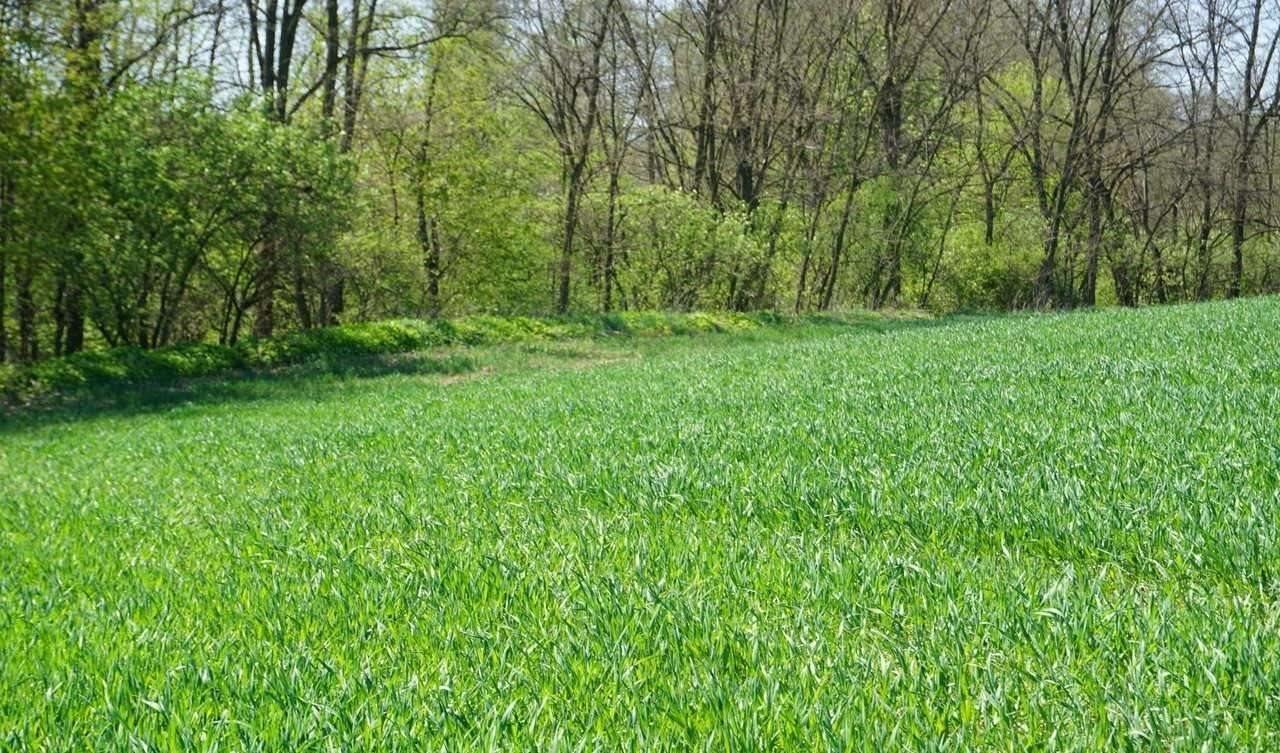 Działka rolna na sprzedaż Brzezinka  3200m2 Foto 1