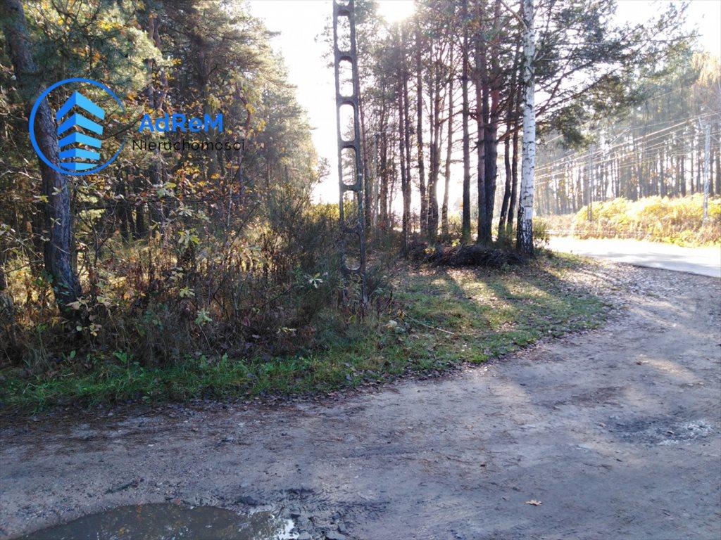 Działka leśna na sprzedaż Jeziórko, Świerkowa  5000m2 Foto 10