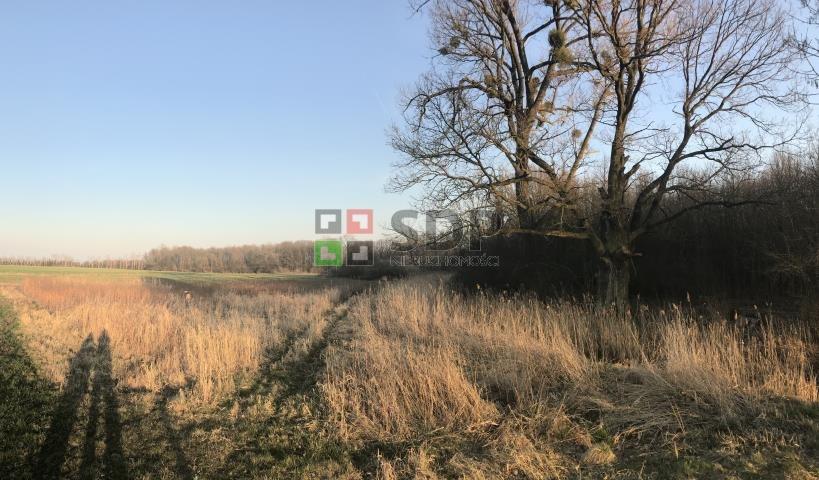 Działka siedliskowa na sprzedaż Bogdaszowice, Dębowa  28000m2 Foto 4