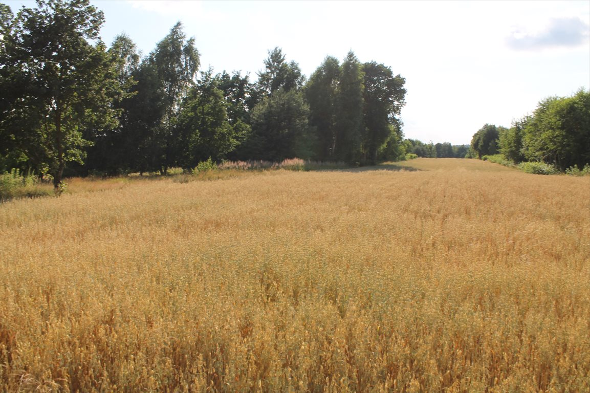 Działka rolna na sprzedaż Łagiewniki Nowe  9500m2 Foto 11