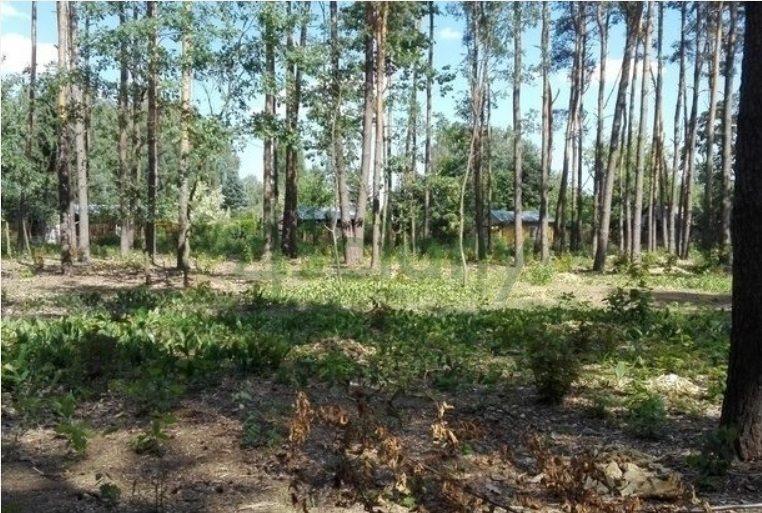 Działka leśna z prawem budowy na sprzedaż Nadarzyn  1500m2 Foto 3