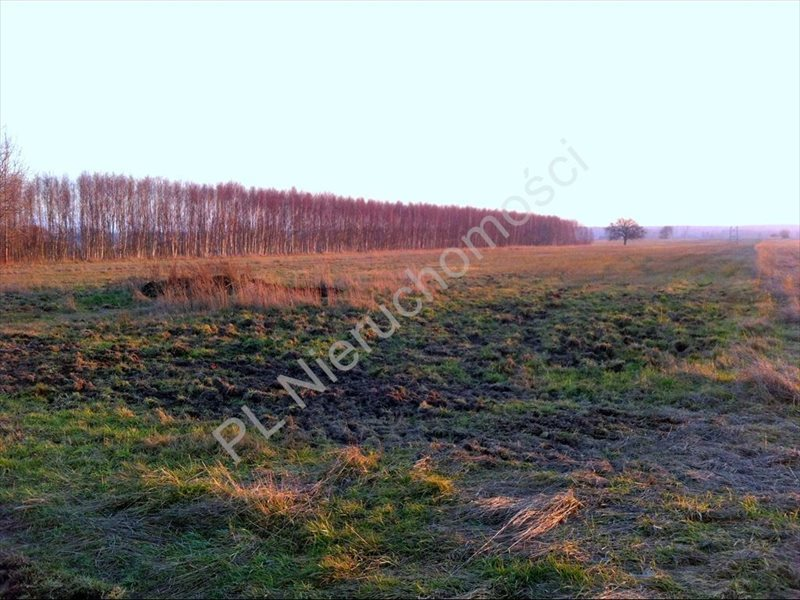 Działka rolna na sprzedaż Tyborów  20000m2 Foto 1