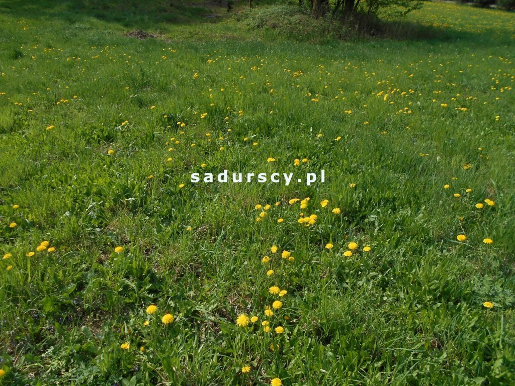Działka budowlana na sprzedaż Gdów, Boczna  3900m2 Foto 8