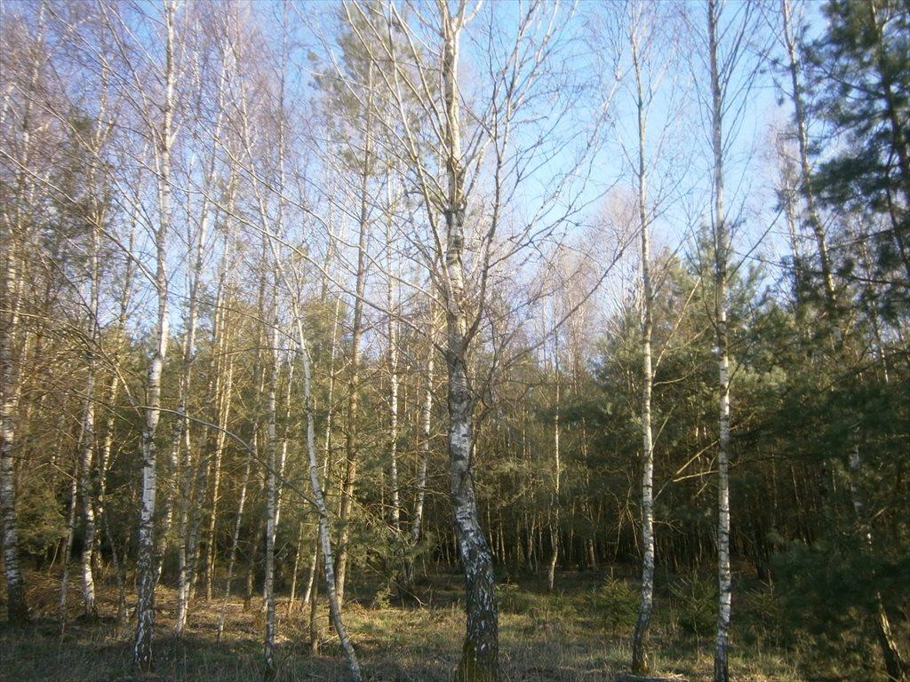 Działka leśna na sprzedaż Stara Wiśniewka  55661m2 Foto 9