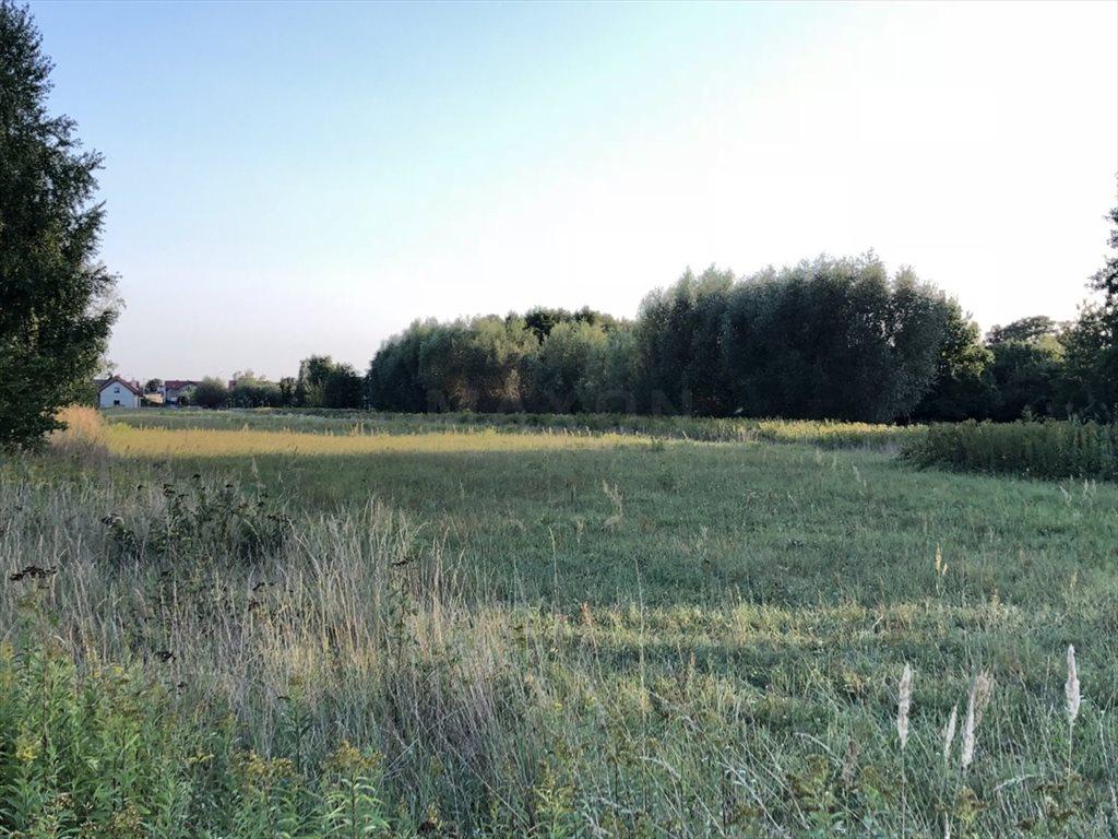 Działka siedliskowa na sprzedaż Łomna  12024m2 Foto 4